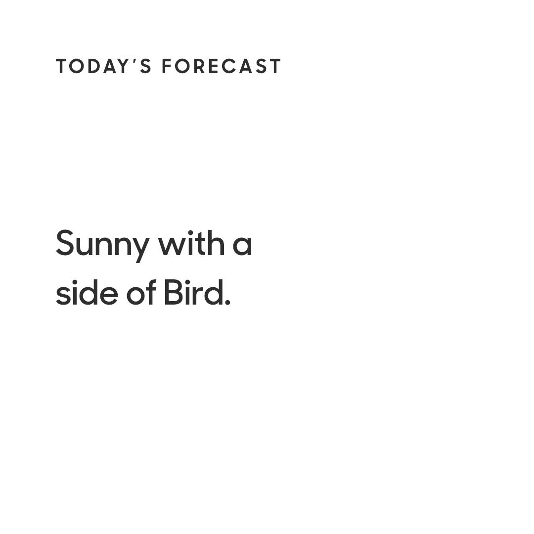 A word from Bird ☀️