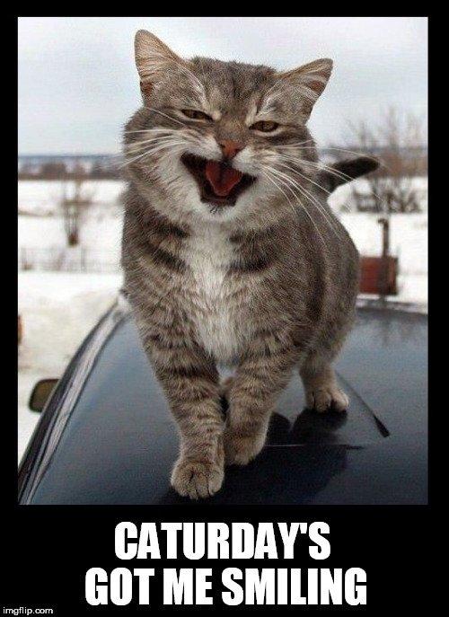 TheFelinePhilosopher's photo on #Caturday