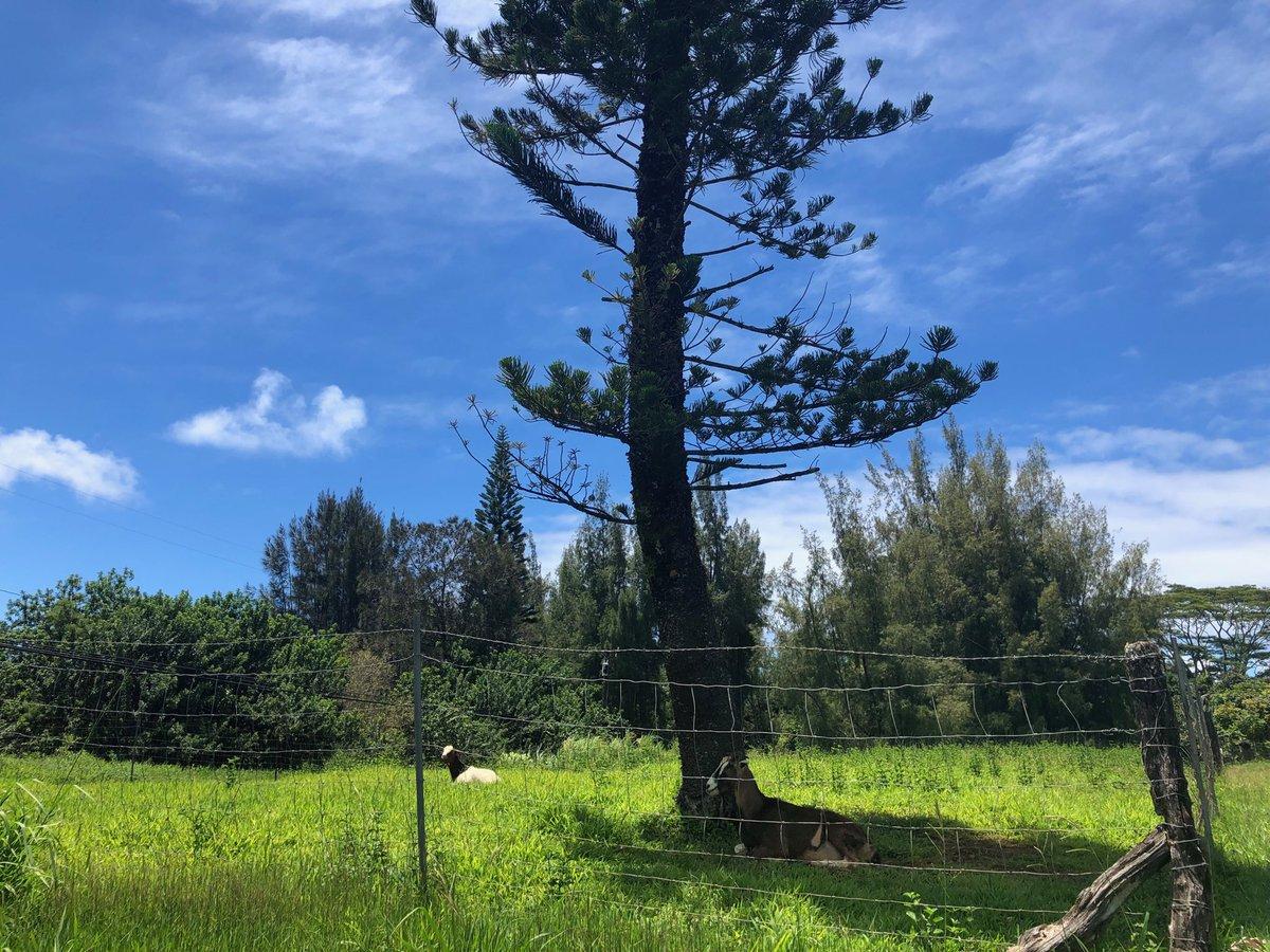 test Twitter Media - North Shore is breezy and beautiful. #cmweather #Maui #goats https://t.co/aq8ylj2aH3