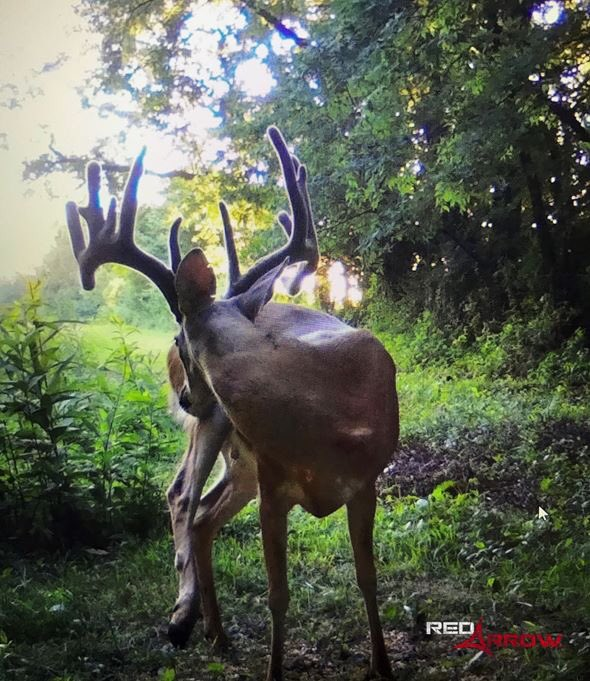 You wake up from a nap in the ground blind to this sight...TWEET the first thought that goes through your mind?!?!