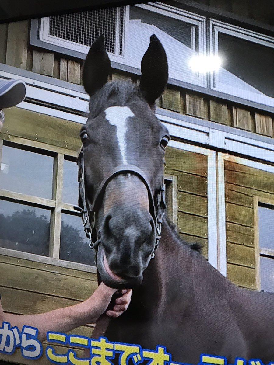 これはソウルスターリングがウイニング競馬に出た時に、テレビを撮ったやつだけど妹に負けないくらい彼女の耳も長い🤣可愛い❤️