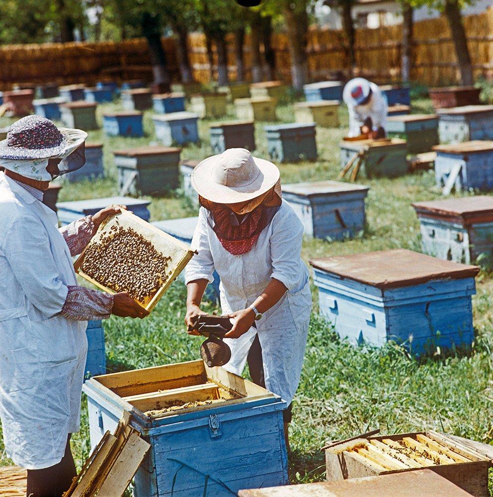 уважаемые пчеловоды картинки уже разделились
