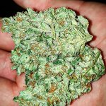 Image for the Tweet beginning: #Gelato súper resinosa!!!  #indoor #cannabis #seeds