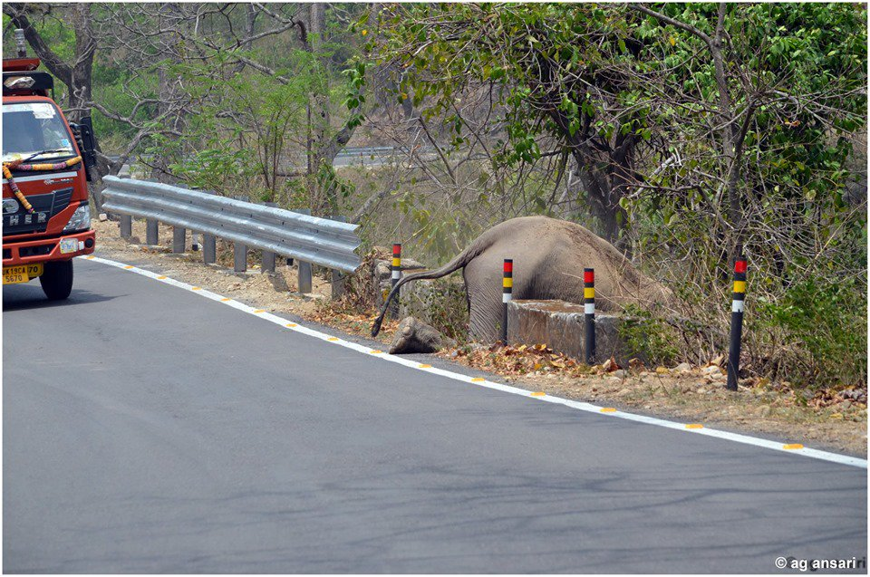 Be proud homo Sapiens, u have brought the gentle giant to its knees.With its passage from #Corbett to Ramnagar-once contigious #forest sliced by #highway, then blocked by metal fences, the #elephant crawling on its keens to scrable to safety i feel like shit. Pic: @agacorbett <br>http://pic.twitter.com/Niv6tSe9rk