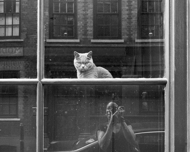 Linda Wisdom Photo's photo on #Caturday
