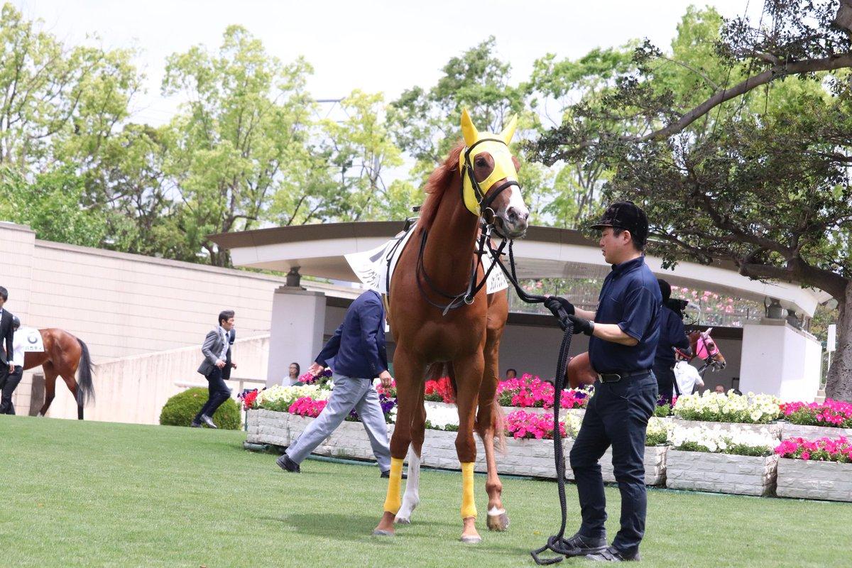 タガノグラシアス(大野拓弥騎手)  17着でした。まずはデビューできたこと、おめでとう。お疲れさまね^^  📷2019.5.19京都4R