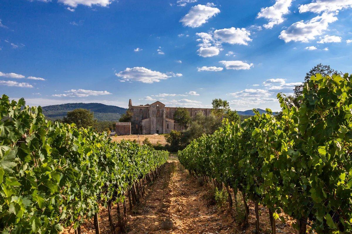 база итальянские виноградники фото имеено из-за