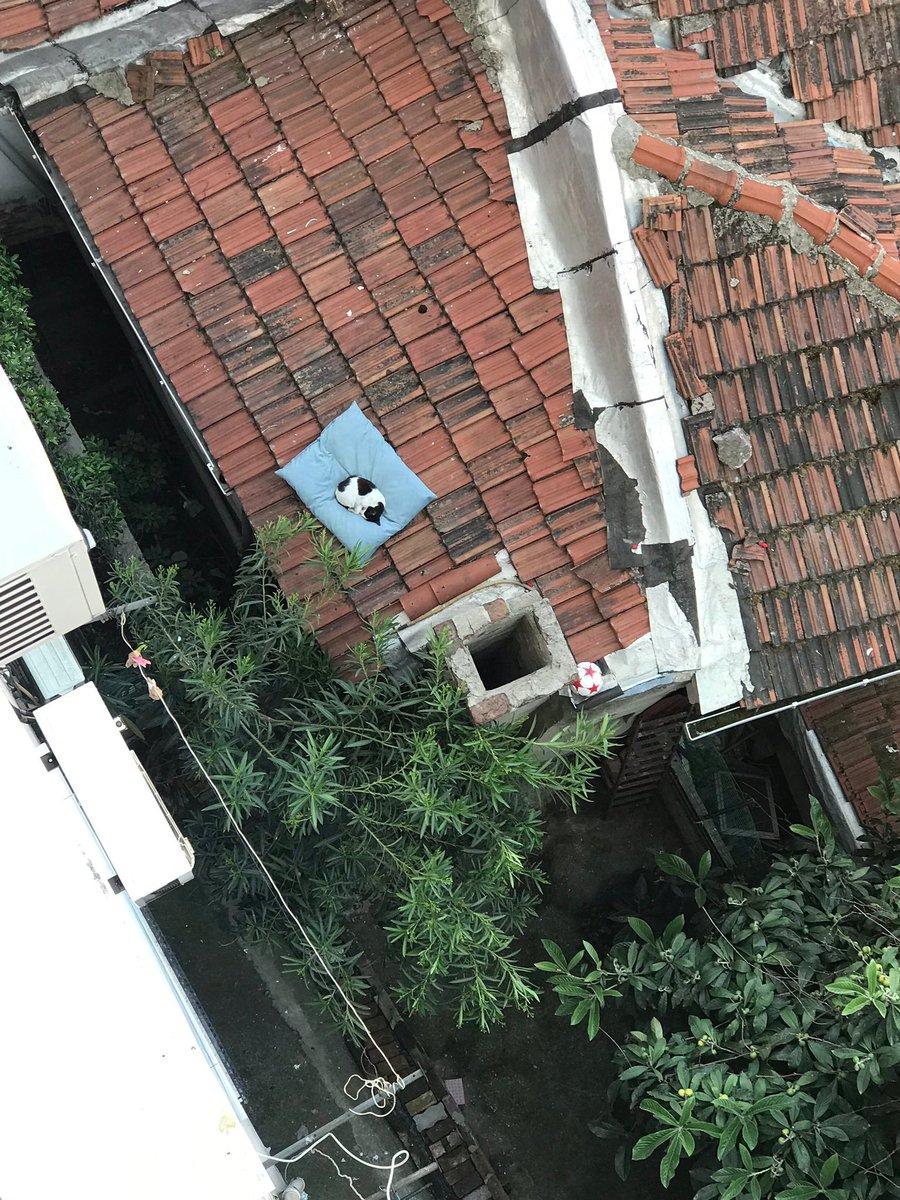 Le coussin du chien est tombé sur ce toit inaccessible  il y a deux jours. il a un  nouveau propriétaire maintenant !
