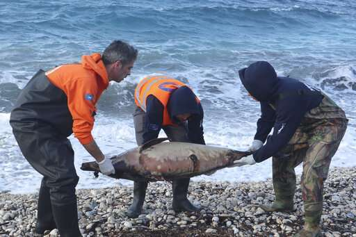 15 dead #dolphins wash up in the #AegeanSea since #February in#Greece http://yamkin.com/2019/05/19/15-dead-dolphins-wash-up-in-the-aegeansea-since-february-in-greece/…