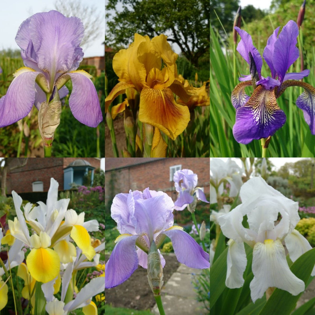 It's all about #irises in the Gunby gardens this week.  Enjoy the fragile beauty of their paper-thin, delicate petals in lots of subtle and vibrant colours.  Photos taken today in late afternoon ☀ #gunbyhall #lincolnshire #nationaltrust