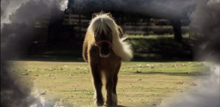 8 years ago today we lost our horsiest friend. Love & miss you, Li'l Sebastian 😔❤️🐴