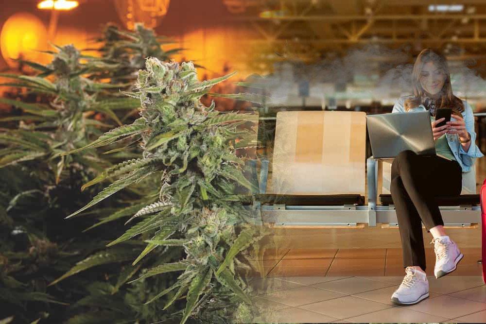 加拿大爱民顿机场被投诉大麻气味太浓郁