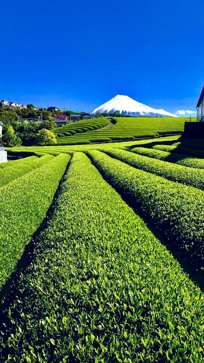 静岡らしい写真が撮れましたのでお納めください(*゚∀゚*)#富士山 #茶畑 #福祉 #採用 #就職 #青空 #新卒 #富士市