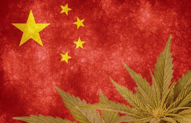 中国悄然兴起大麻种植热潮