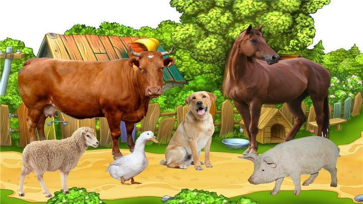 Домашние животные в картинках для детей фото