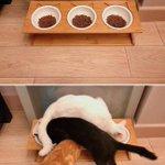 3匹のネコの餌を食べてる様子が面白すぎる!なんでそんな食べ方してるの!