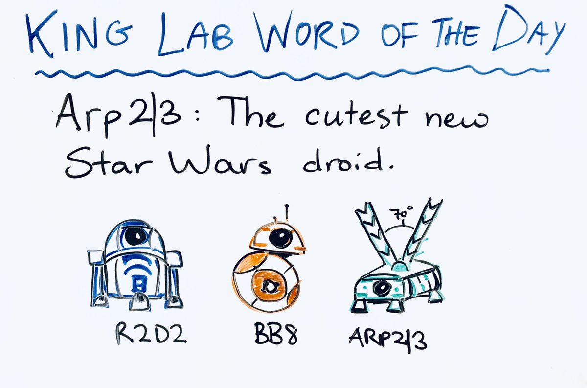 King Lab Word of the Day on Twitter: