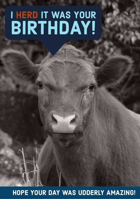 Happy belated 21st birthday to our very own, Katie Price! We hope your day was full of fun, laughter, and COWS.