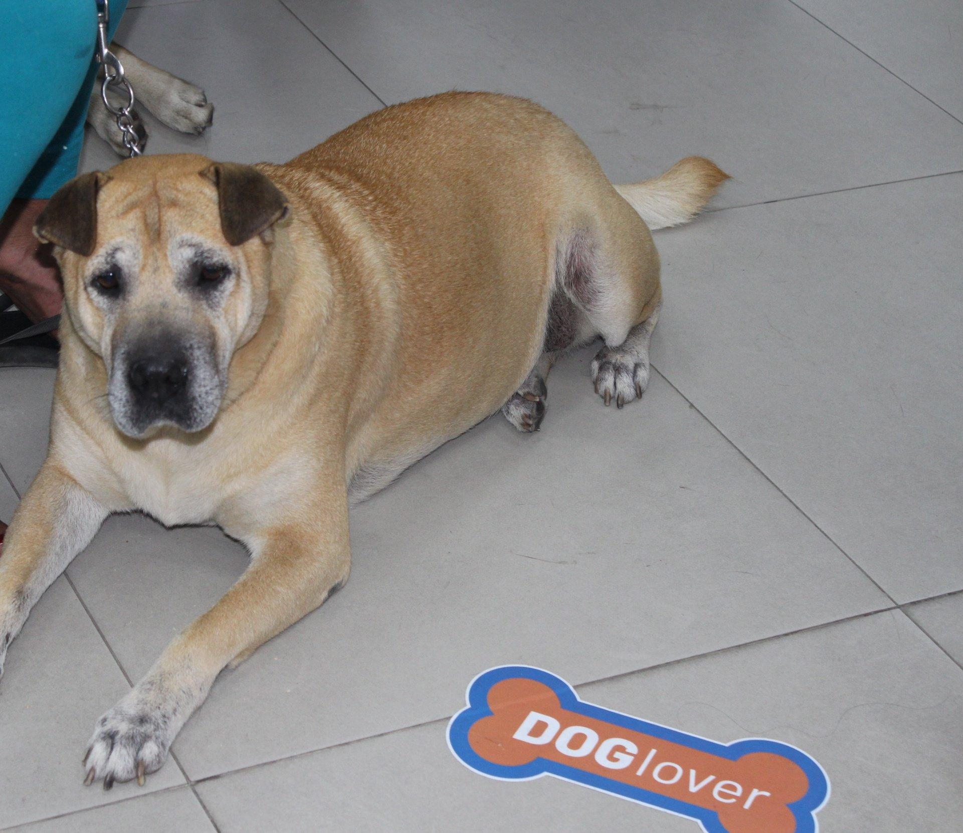 entel-dog-lover