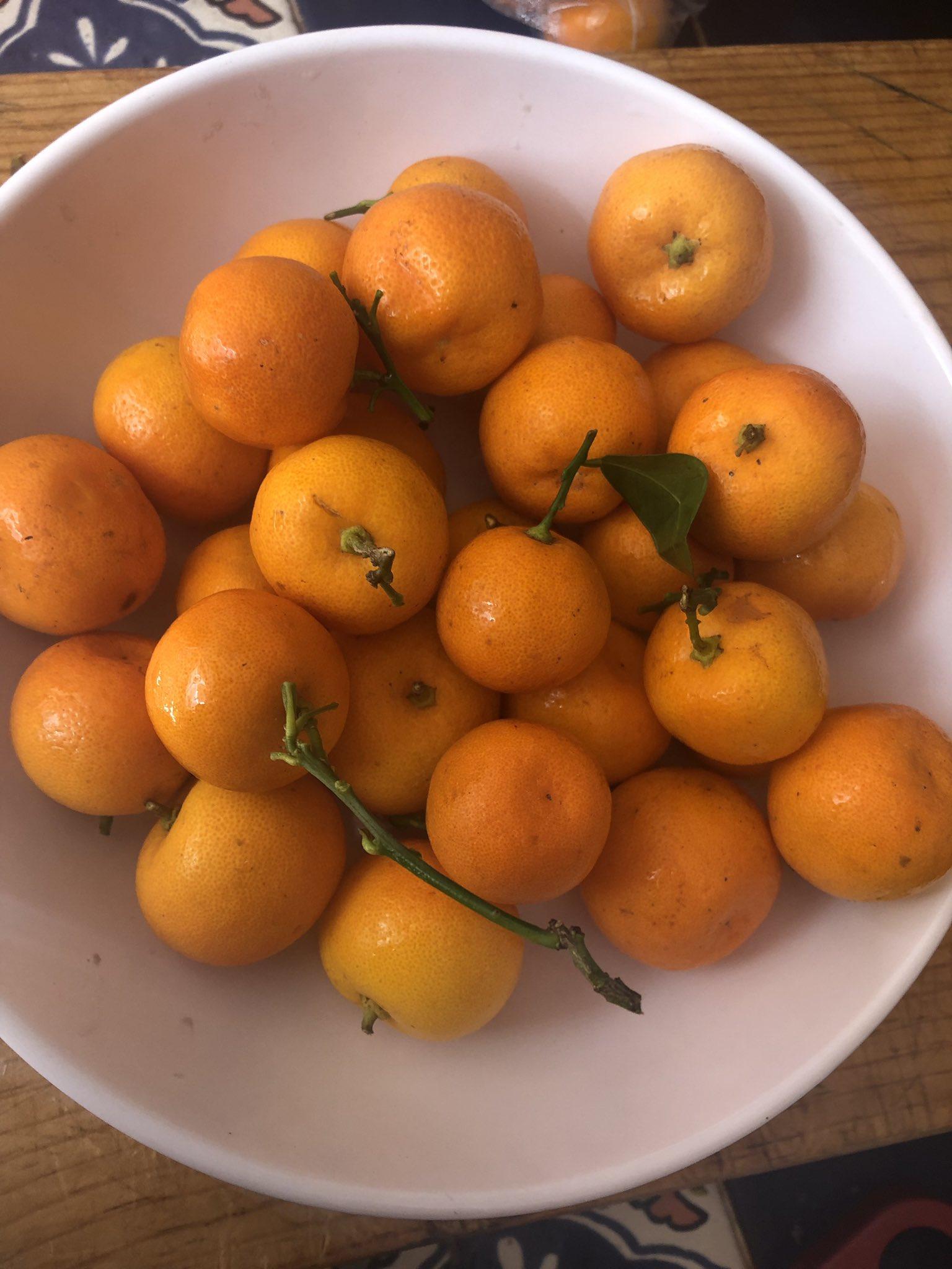 """constanza lameiras on Twitter: """"Me traje de Sinaloa unas naranjitas chinas  (mis vecinos de Coyoacán tienen un árbol enorme y las tiran a la basura,  así es la vida... 🤷🏻♀️) y hoy"""