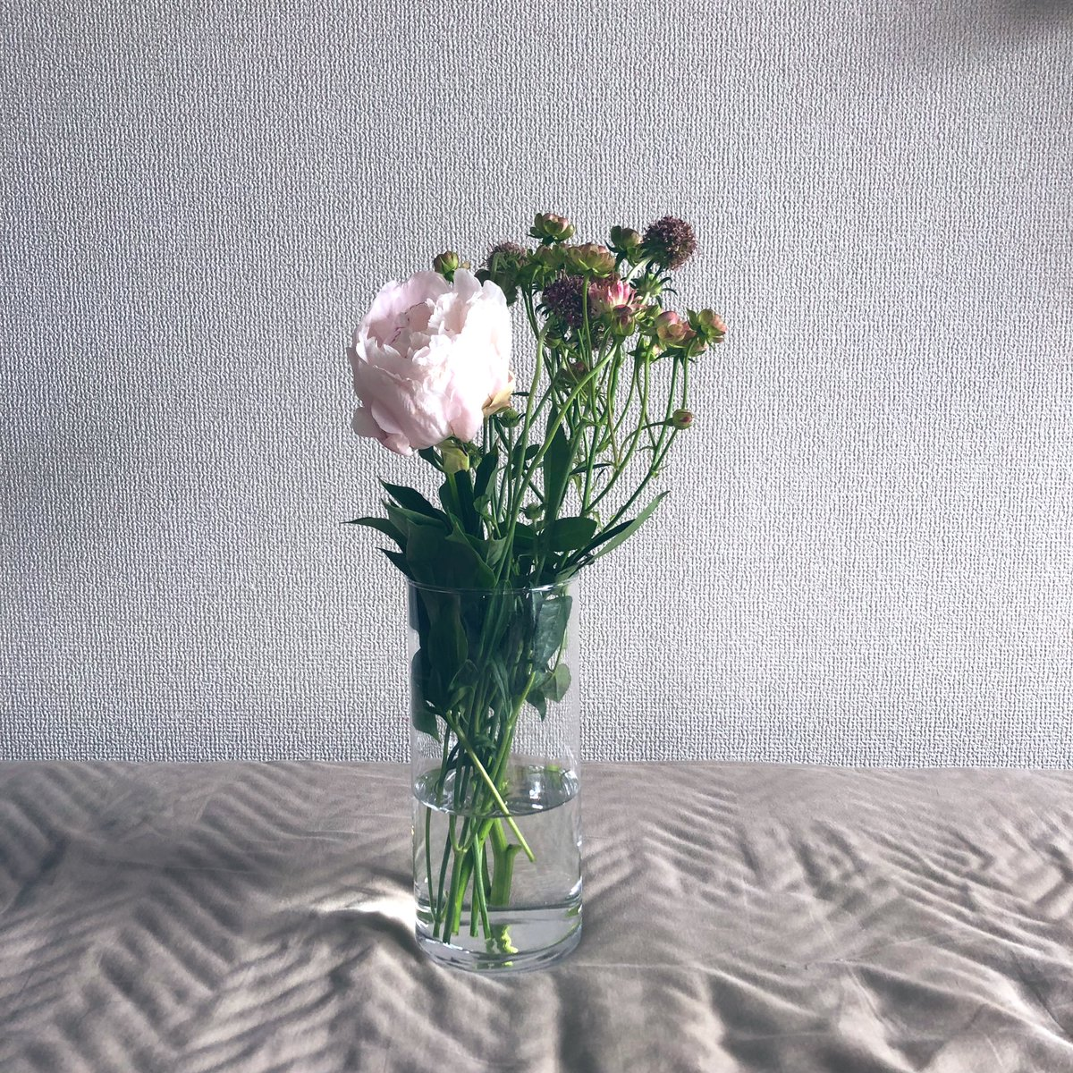少し前に4月の花を買いました。4月の終わりに内定を頂き、嬉しくてすぐ花屋さんに向かいました。花屋のお姉さんとお話をしている最中に内定を頂いた自分へのご褒美なんです、と話したら「お疲れ様でした」という言葉と芍薬をプレゼントしてくれました。就職活動がんばってよかったです。