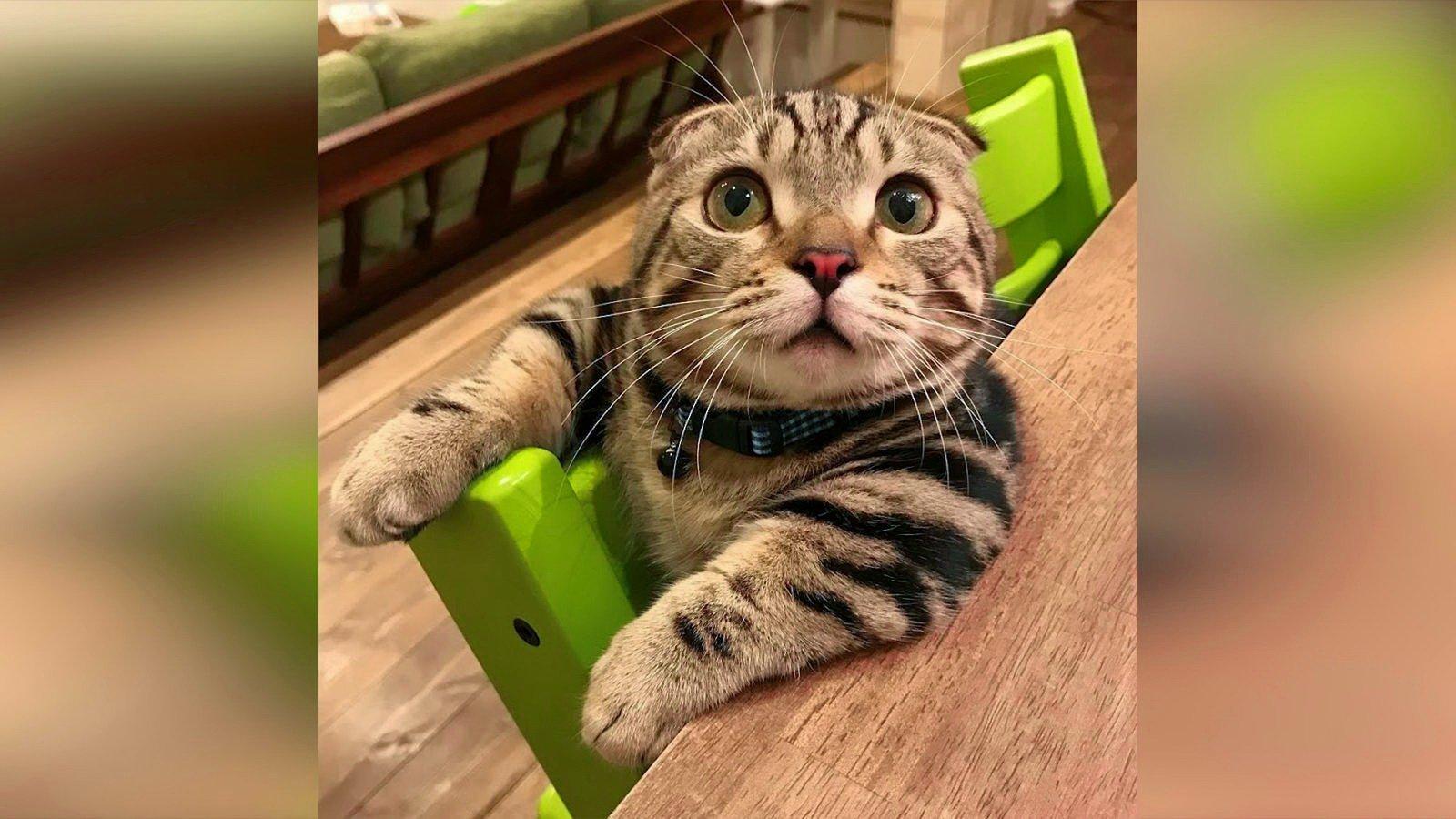 Смешные животные фото с надписями новые до слез 2017
