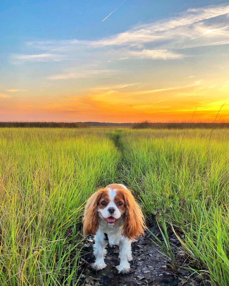 RT if you love a Lowcountry sunset just as much as this cutie exploring #Charleston <br>http://pic.twitter.com/cOtxnYVrqj