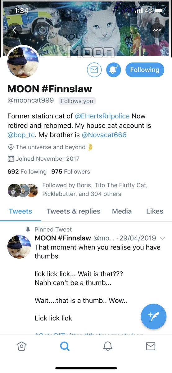 Can we please help my bro get more followers on this account! It would be amazing! 🐾 #CatsOnTwitter #CatsOfTwitter #cats #cute #animal #white #folleers #help #cat #pet https://t.co/sQoqlQTkgN