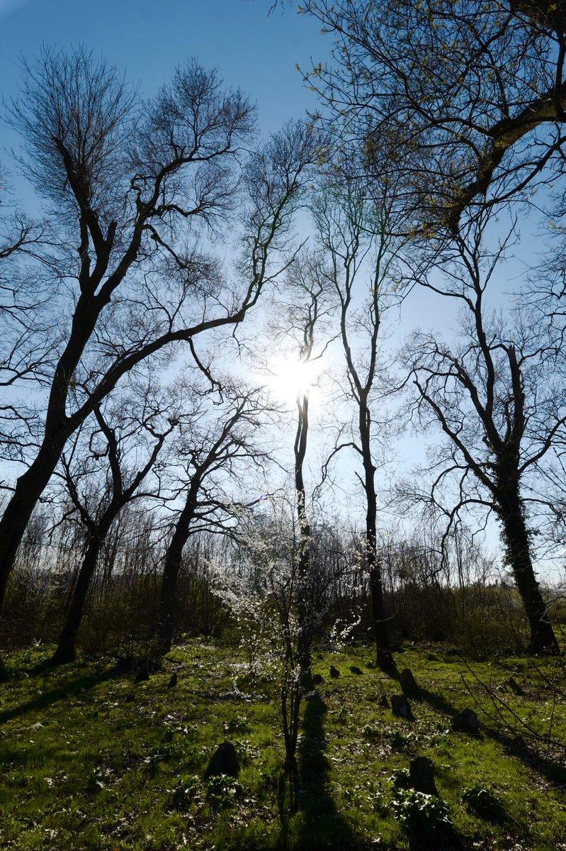 Kökler bizi sınırlamaz, tersine özgürleştirir. Sağlam köklere sahip olmadan semâya doğru yükselmek mümkün değildir.