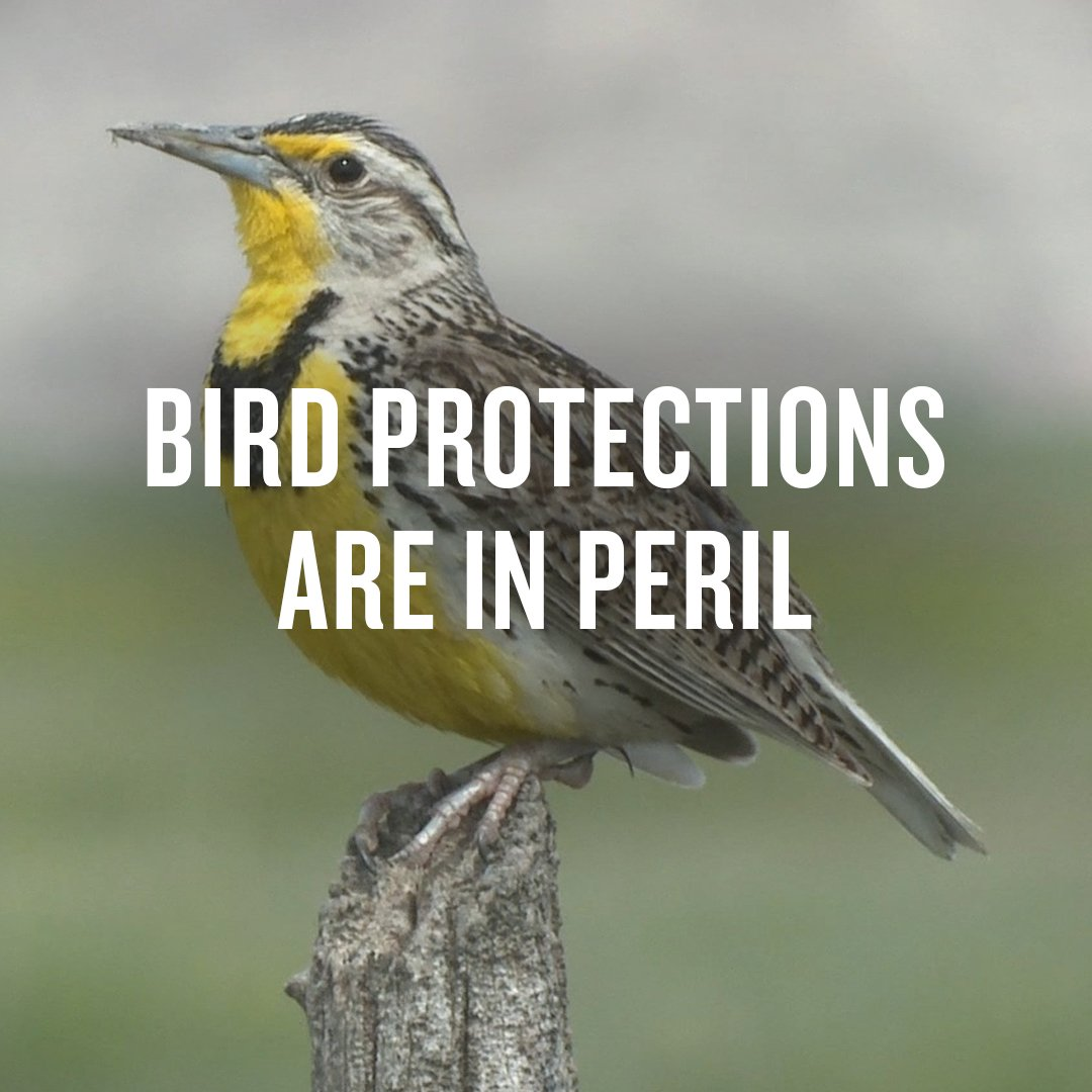 Protect the Migratory Bird Treaty Act | NRDC