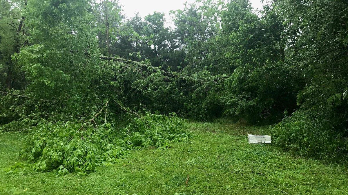 Downed trees along Warrior-Jasper Road #alwx #WVTM13 | Scoopnest