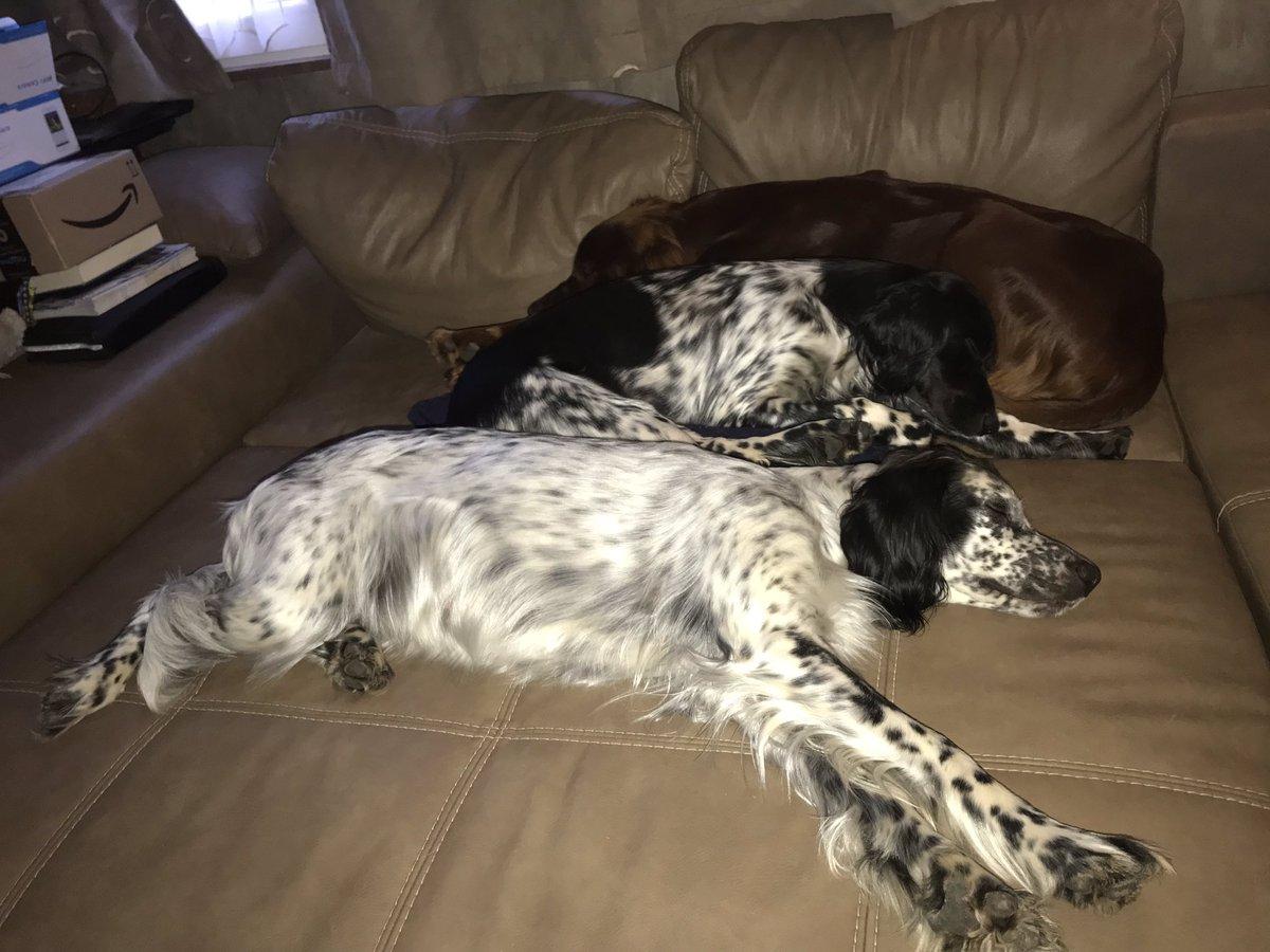 Das Trio Infernale gaaaanz lieb. #setterocean #setterzeus #setternanda #trioinfernale #setter #englishsetter #hundemüde #gutenacht #irishsetter  #hundeliebe #dogfotography #hundefotografie #hunde #hundewelt #dog #setteringlese #setteranglais #setterirlandes #allianzviayo #schlafpic.twitter.com/v8p8wHcC0G