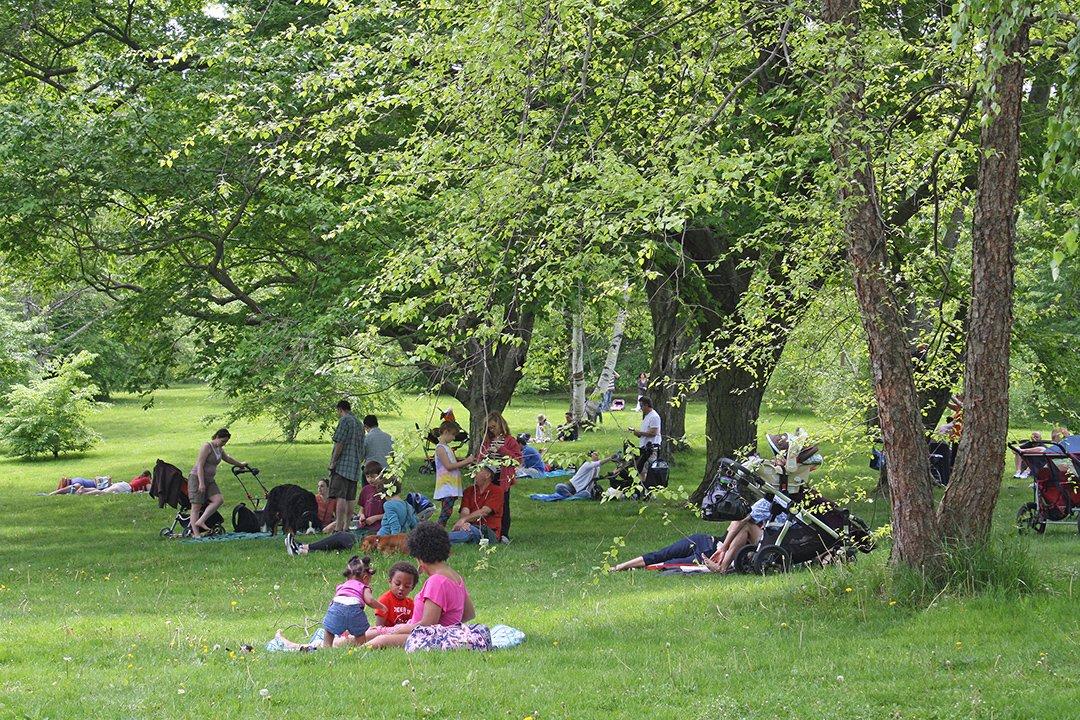 картинка пикник в парке реакции