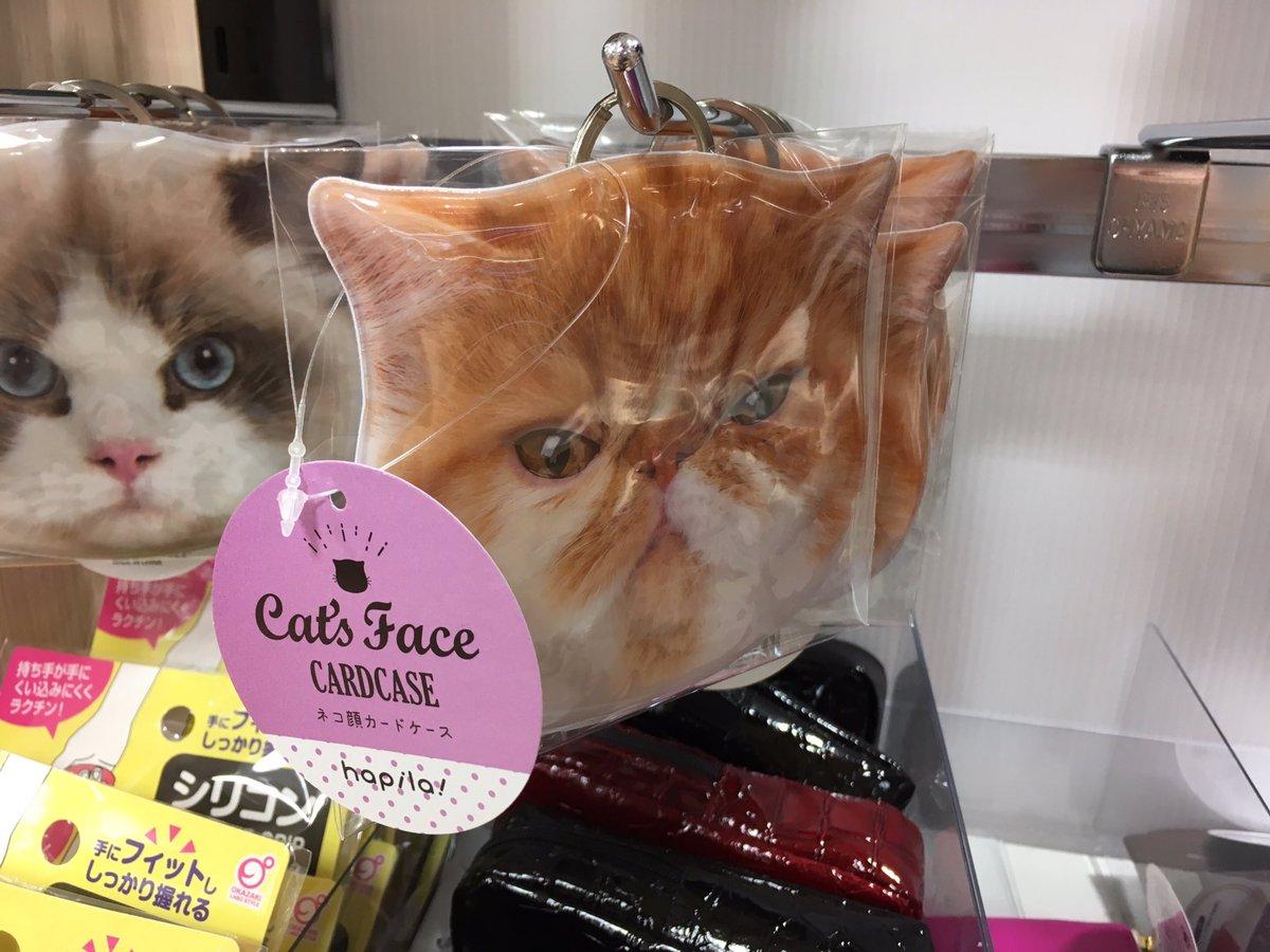 test ツイッターメディア - キャンドゥで猫顔カードケースを買いました♡  種類はエキゾチックショートヘアかな?(・∀・)  #キャンドゥ #猫グッズ https://t.co/UyzqRwBsC1