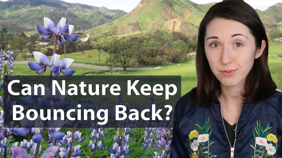 New video! I talked to biologists at @SantaMonicaMtns about the recent wildflower bloom and how the local ecosystem is recovering from last falls wildfires: youtu.be/dpbJqna2L_8