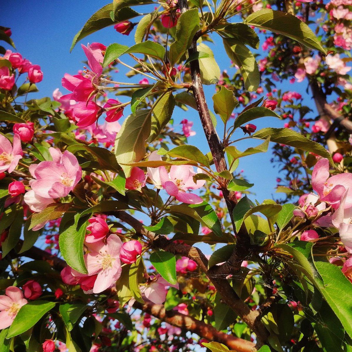 цветущие деревья в сочи фото психологии эту