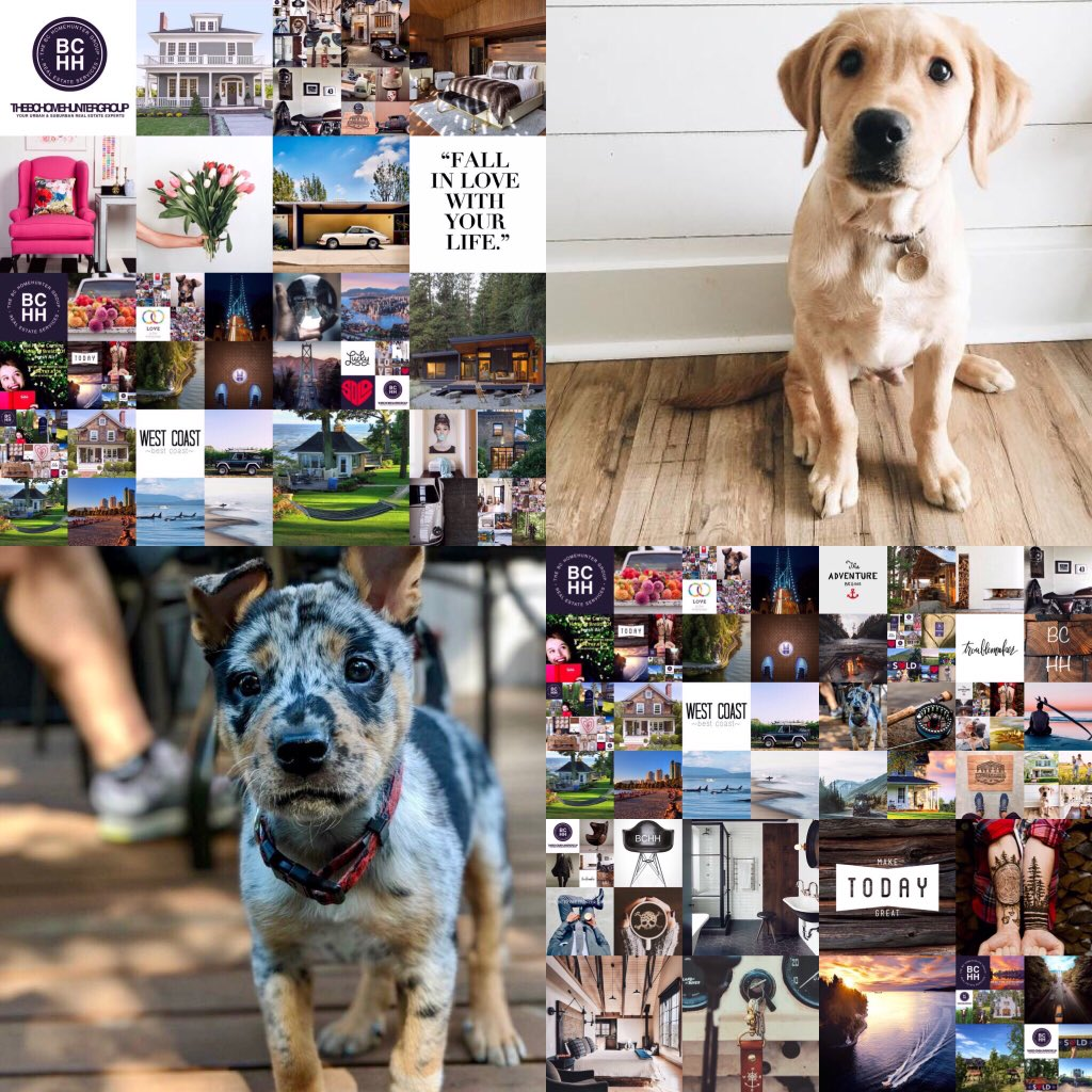 THE #BC HOME HUNTER GROUP Our wonderful clients know but you may not - #BCHH offers all our home sellers complimentary dog walking while selling your home. #Vancouver #YVR #WestVan #NorthVan #Squamish #Whistler #WhiteRock #FraserValley #VancouverIsland #Okanagan #BCHomeHunter