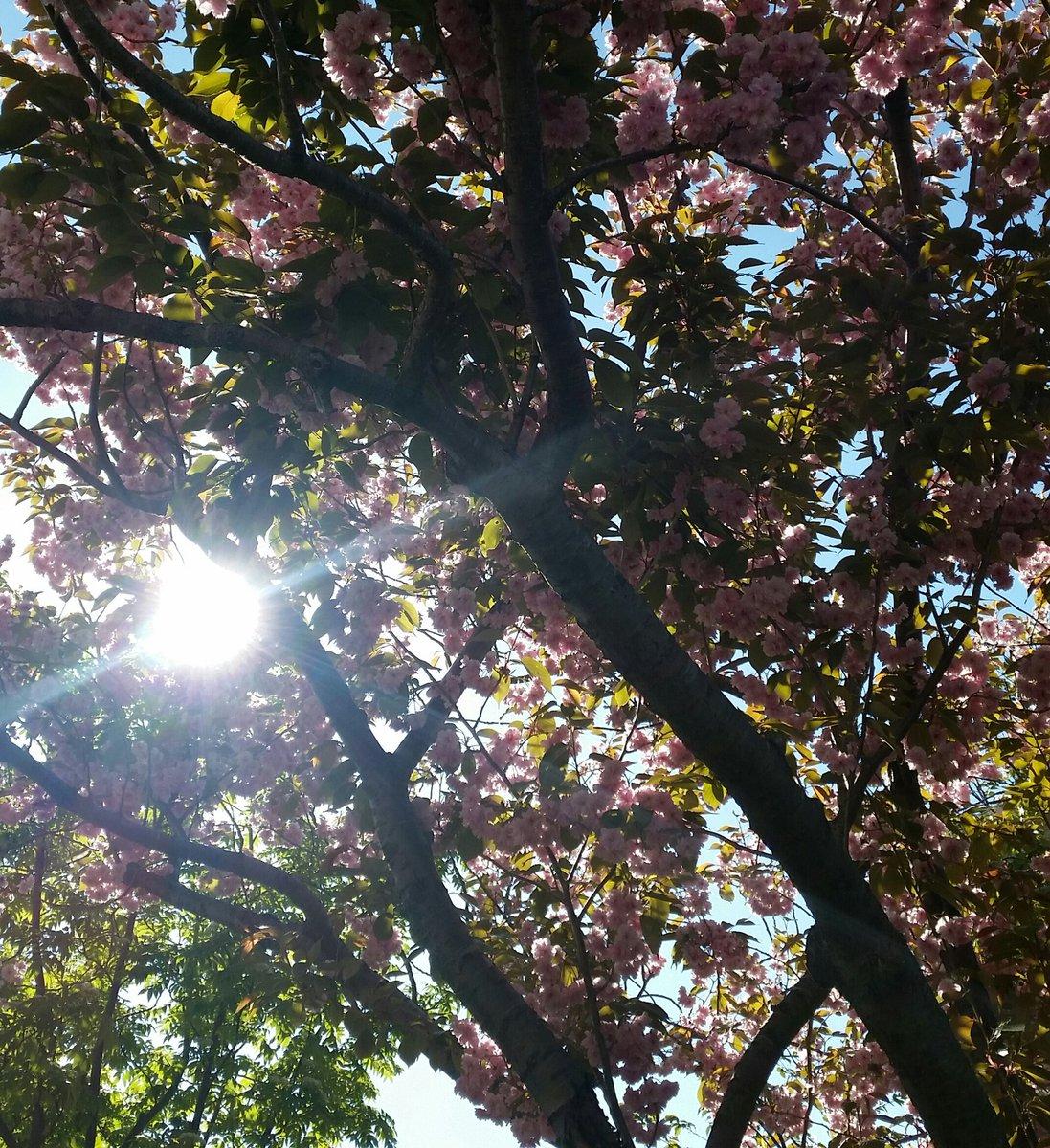 ?沿道の桜が綺麗ですねいま私は職替えの真っ最中!パート勤務をこなしつつ、転職準備に追われてます。自身をスキルUPして家族を養い、好きなことも出来るように上を目指して頑張ってます。という訳で、本格的な活動再開は先ですが、気長にお付き合いくださると嬉しいです。皆様どうぞよろしくね♪