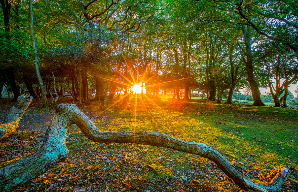 яркие картинки с природой с добрым утром открытую вам