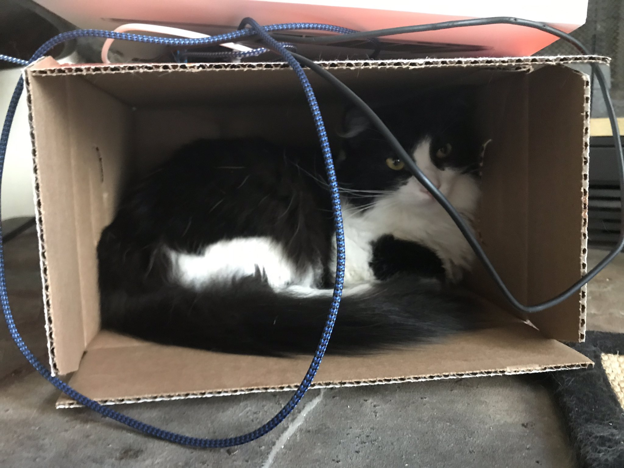 image: black-and-white cat in a box.