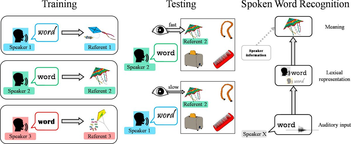 New paper available online! Voices in the mental lexicon: Words carry indexical information that can affect access to their meaning Results show that indexical information can implicitly and automatically affect spoken word recognition. @bcbl_ https://doi.org/10.1016/j.jml.2019.05.001 …