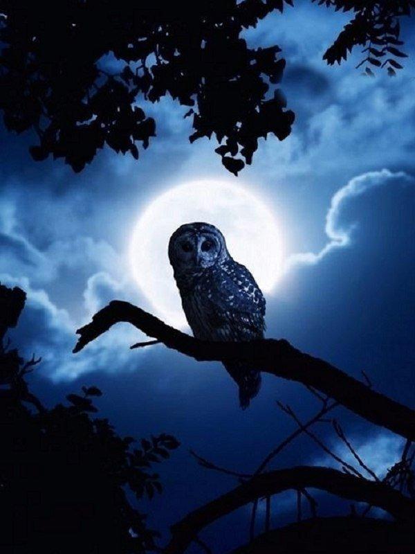 тонкие картинки птицы ночью это