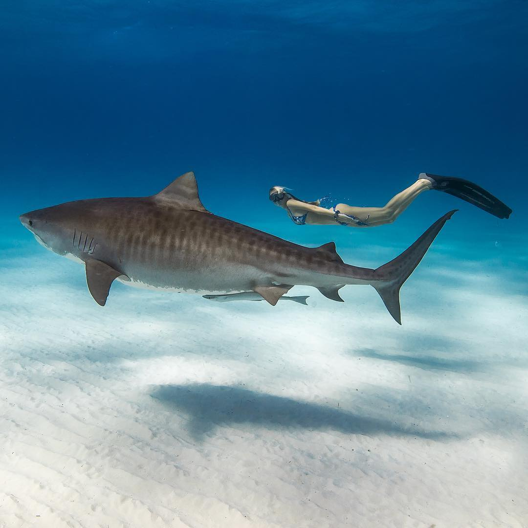 гугл хоть реальные фото акул в океане один