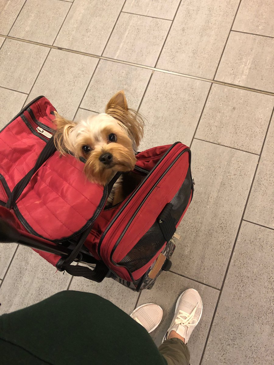 Look who's all packed and coming to see meeeee! Thank you aunty Nina! CANNOT wait @ninadefilla 🤗💕