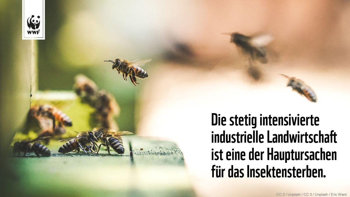 WWF Deutschland's photo on #Bienen