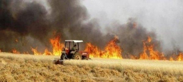But #Iraq is burning already.Ks of acres with wheat ready to harvest are SET on fire.#Iran #KSA#لا_لحرب_في_العراق#العراق  #Kurdistan #Qatar #Kuwait #Egypt @UNIraq #Bahrain #UAE #Syria #Lebanon #Syria #Jordan #Bahrain #كردستان #سوريا #قطر #السعودية #الامارات #مصر #الاردن
