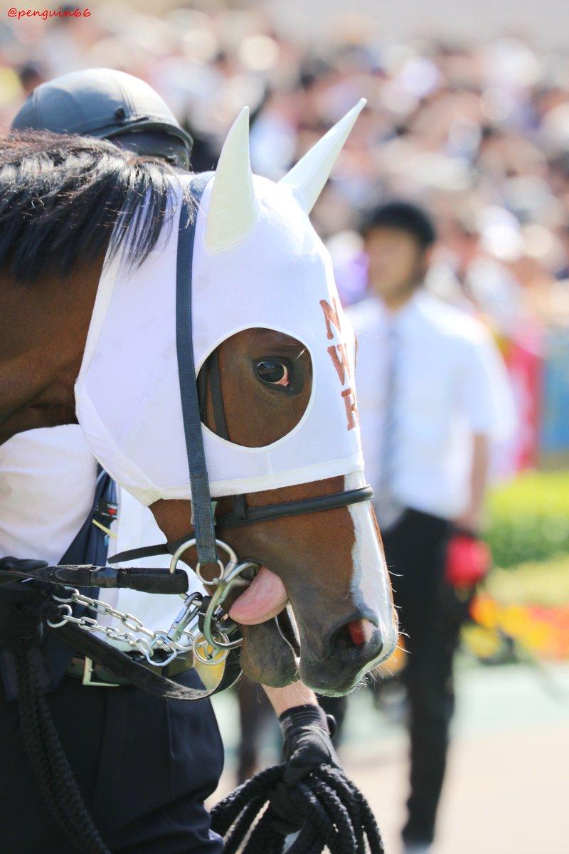 20190519東京11R   15ノーワン ハーツクライのお嬢さん、お母さんはプレイガールさんです  #ノーワン #keiba