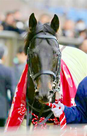 🏇5月26日(日) 第86回東京優駿牝馬日本ダービーGⅠ ◎ダノンキングリー / 戸崎圭太騎手