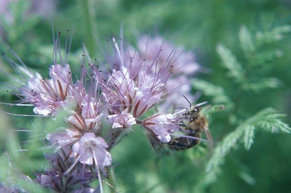 Bundesinformationszentrum Landwirtschaft's photo on #Bienen