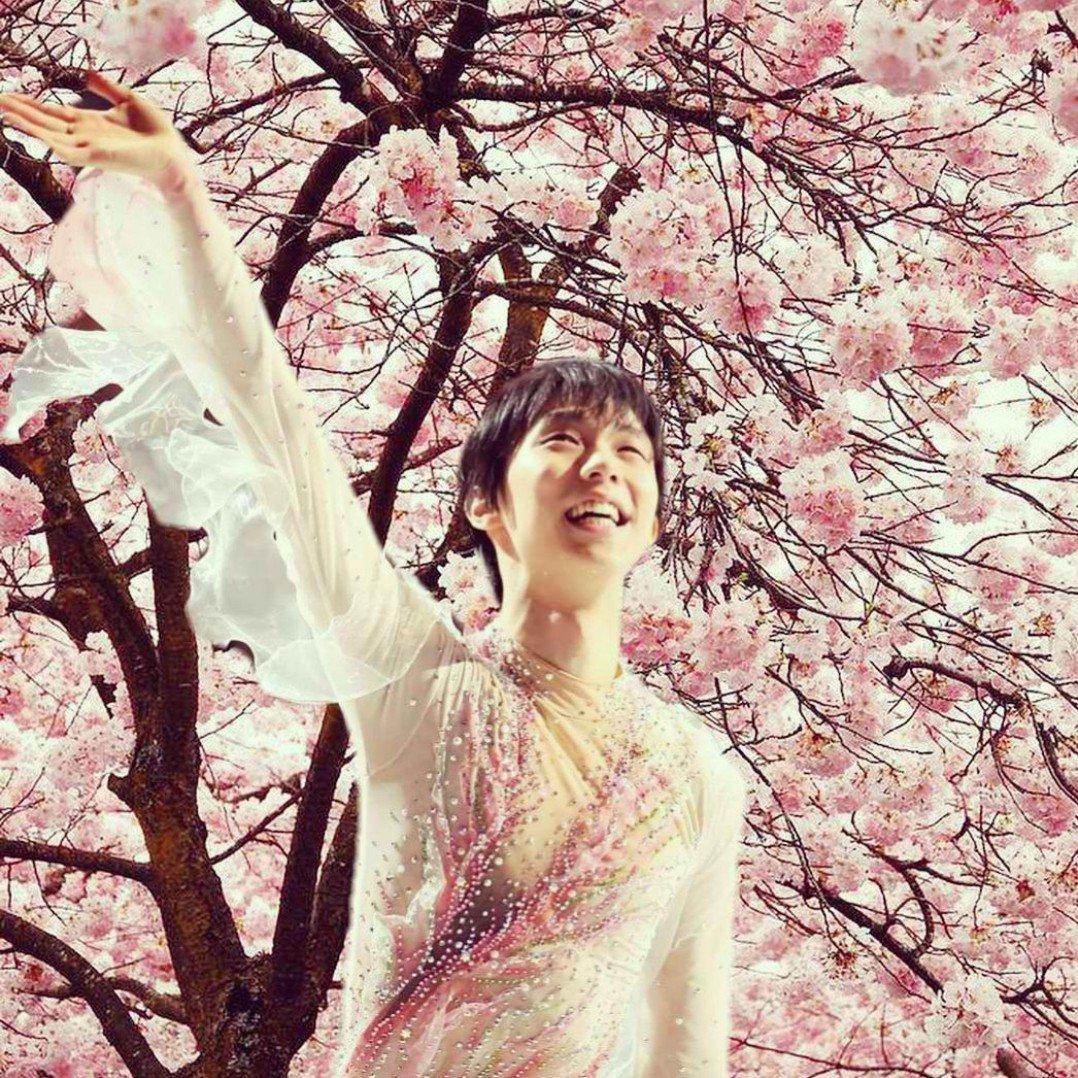 Sakura fairy Hanyu. 🌸🌸🌸 #YuzuruHanyu #羽生結弦 #GetWellSoonYuzu #LoveYuzuruFromAllOverTheWorld